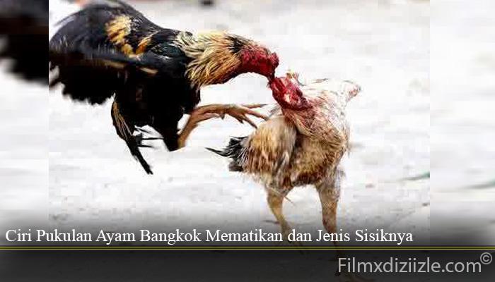 Ciri Pukulan Ayam Bangkok Mematikan dan Jenis Sisiknya