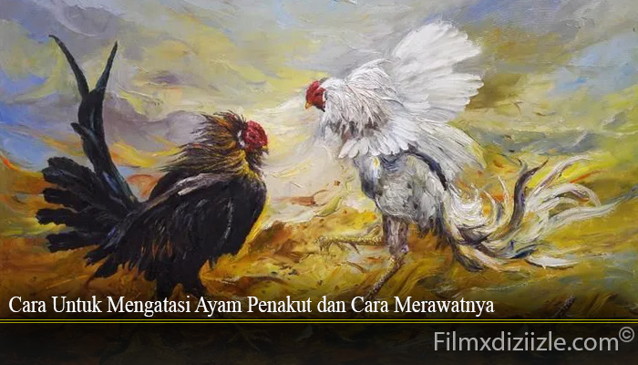 Cara Untuk Mengatasi Ayam Penakut dan Cara Merawatnya
